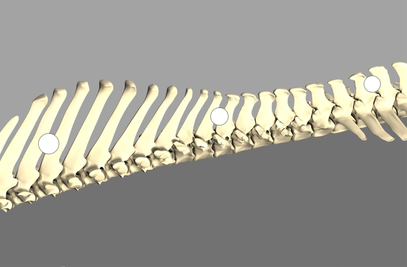 Backbone_5_2